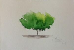 carmen-muruve-arboles-solitarios-002